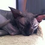 Precilla's Mynthe 2 years | 2012